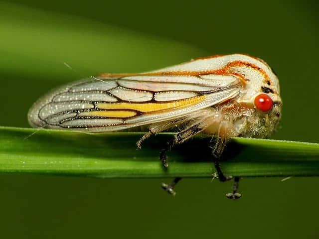 By Katja Schulz from Washington, D. C., USA - Oak Treehopper, CC BY 2.0, https://commons.wikimedia.org/w/index.php?curid=55965107