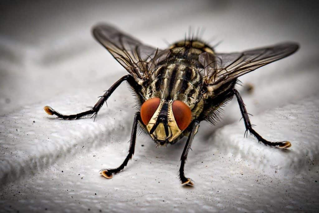 do dead flies attract more flies