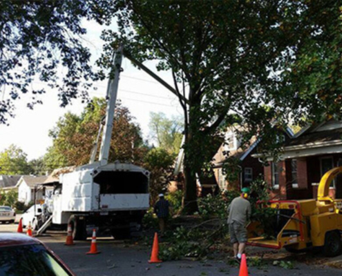 kellys-tree-service-removal-clean-evansville-indiana