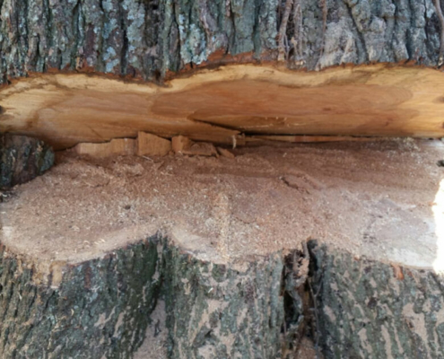 tree-removal-evansville-in
