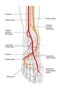 Feet Medians