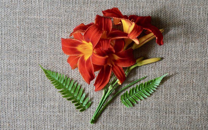 Autumn Red Day Lily By Editor In Chief Rebecca Gordon Publisher Buttermilk Lipstick Culinary Entertaining Techniques Instructional Digital Magazine. Summer Entertaining Cooking Baking Tutorials Modern Southern Socials Game Day Entertaining RebeccaGordon Pastry Chef TV Cooking Personality Birmingham Alabama ButtermilkLipstick Southern Entertaining Summer Flowers