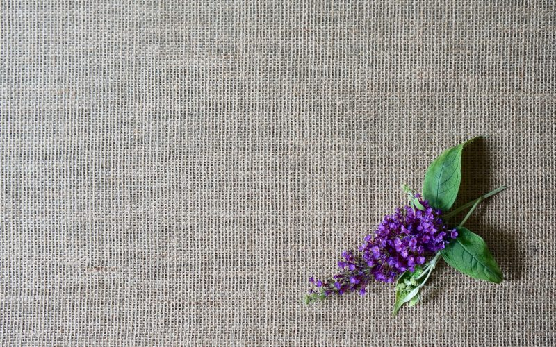 Butterfly-Bush-Nanho Purple Buddleia-Butterfly-Bush-Rebecca-Gordon-Buttermilk-Lipstick-Culinary-Entertaining-Techniques-RebeccaGordon-Southern-Hostess-Birmingham-Alabama