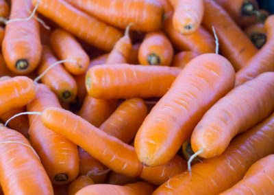 Freshly harvested carrots being washed and cleaned for market.