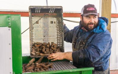 Jacob Slosberg of Boldly Grown Farms washing carrots.