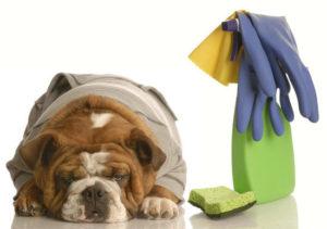 desinfetante caseiro para animais1 300x211 - 3 Tips to Make House Cleaning Around Pets Easy