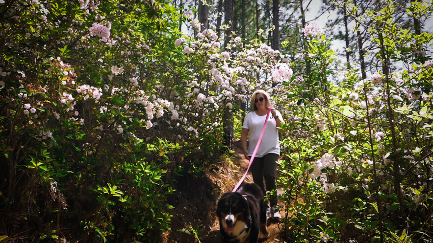 Trails for you and your Pets
