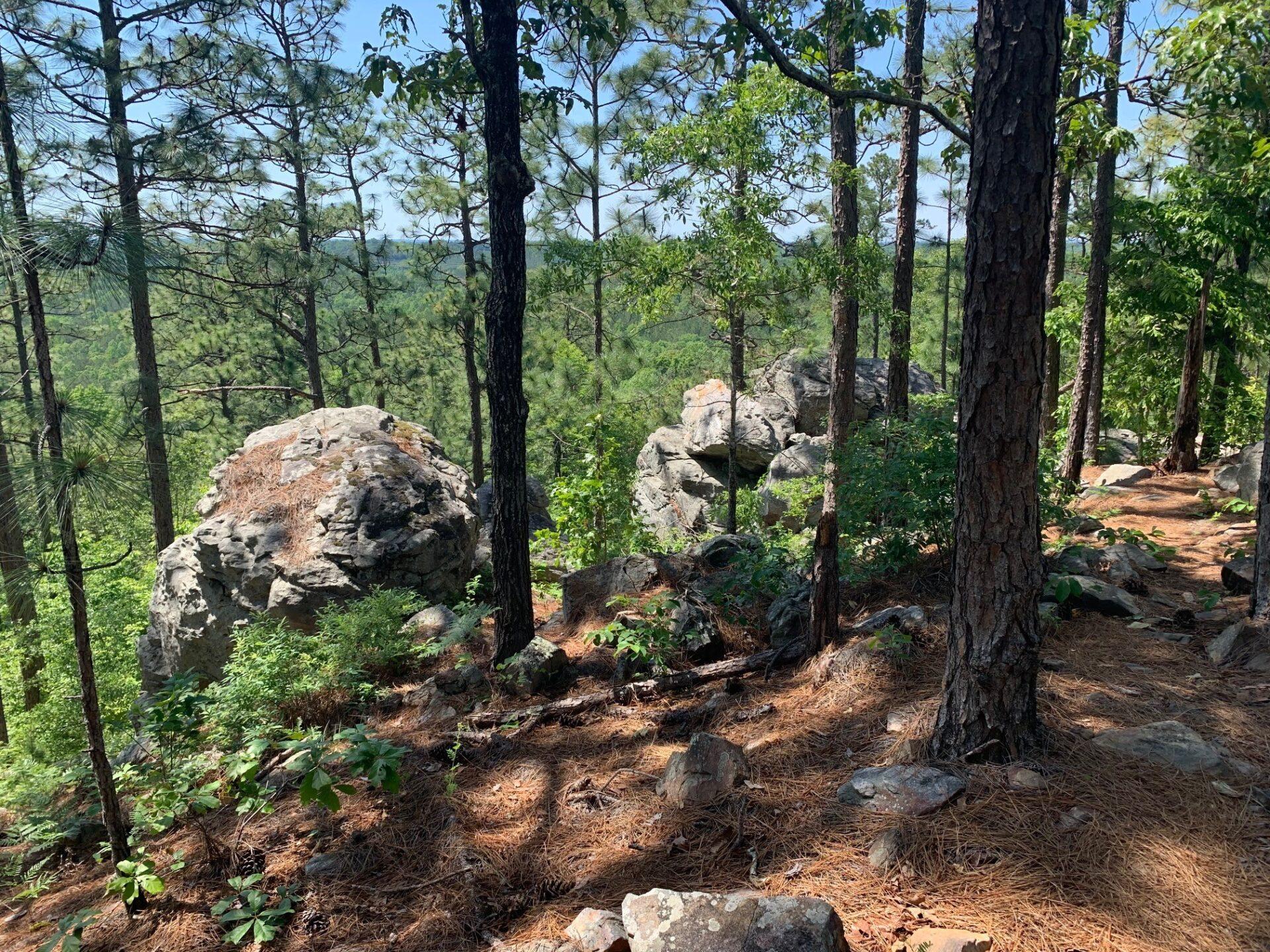 John. B Scott Forever Wild Trail