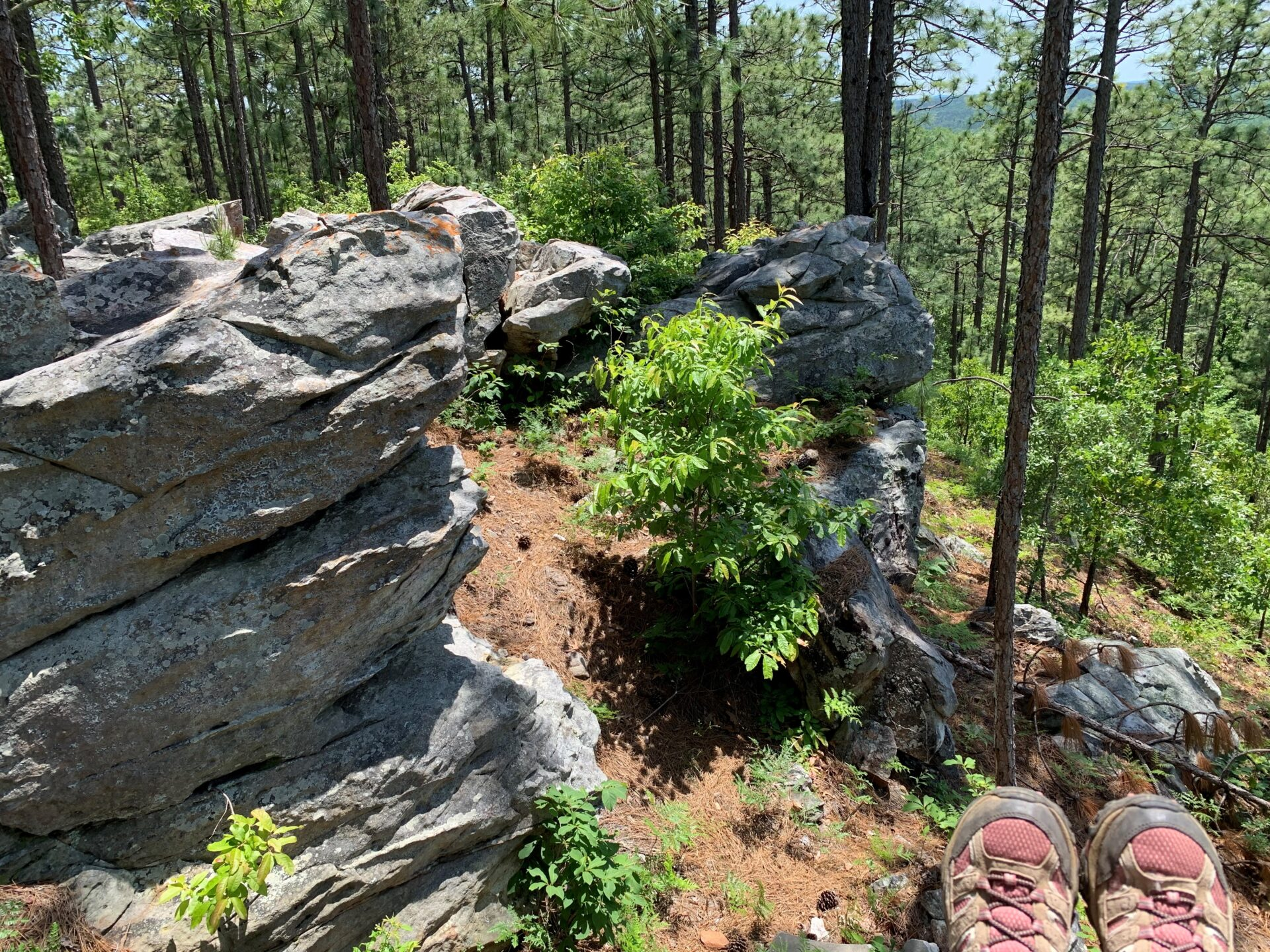 rock bluffs overlooking pine trees