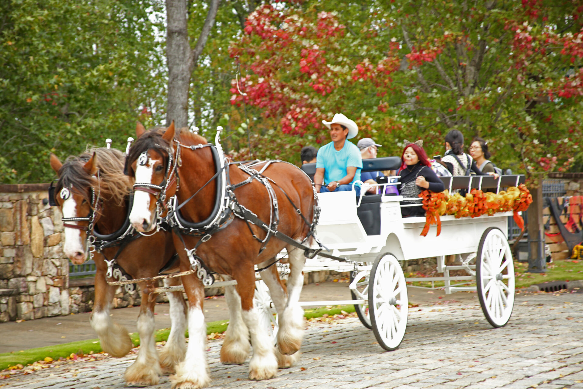 people in a horse and carriage