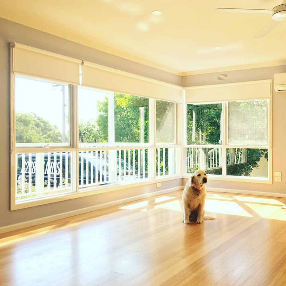 A dog with roller blinds in the background