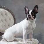 Pet Portraits by Cruz Portrait Design