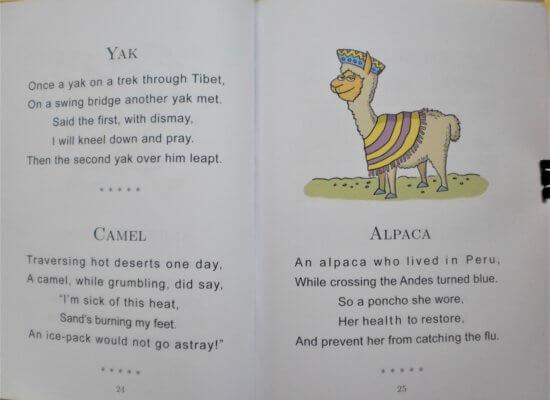 Alpaca wearing a poncho and Peruvian lady's hat