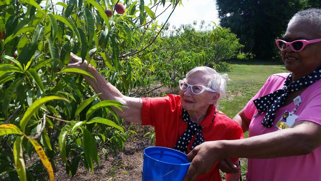 Resident and Life Coach picking yummy peaches together at the end of a fun day.