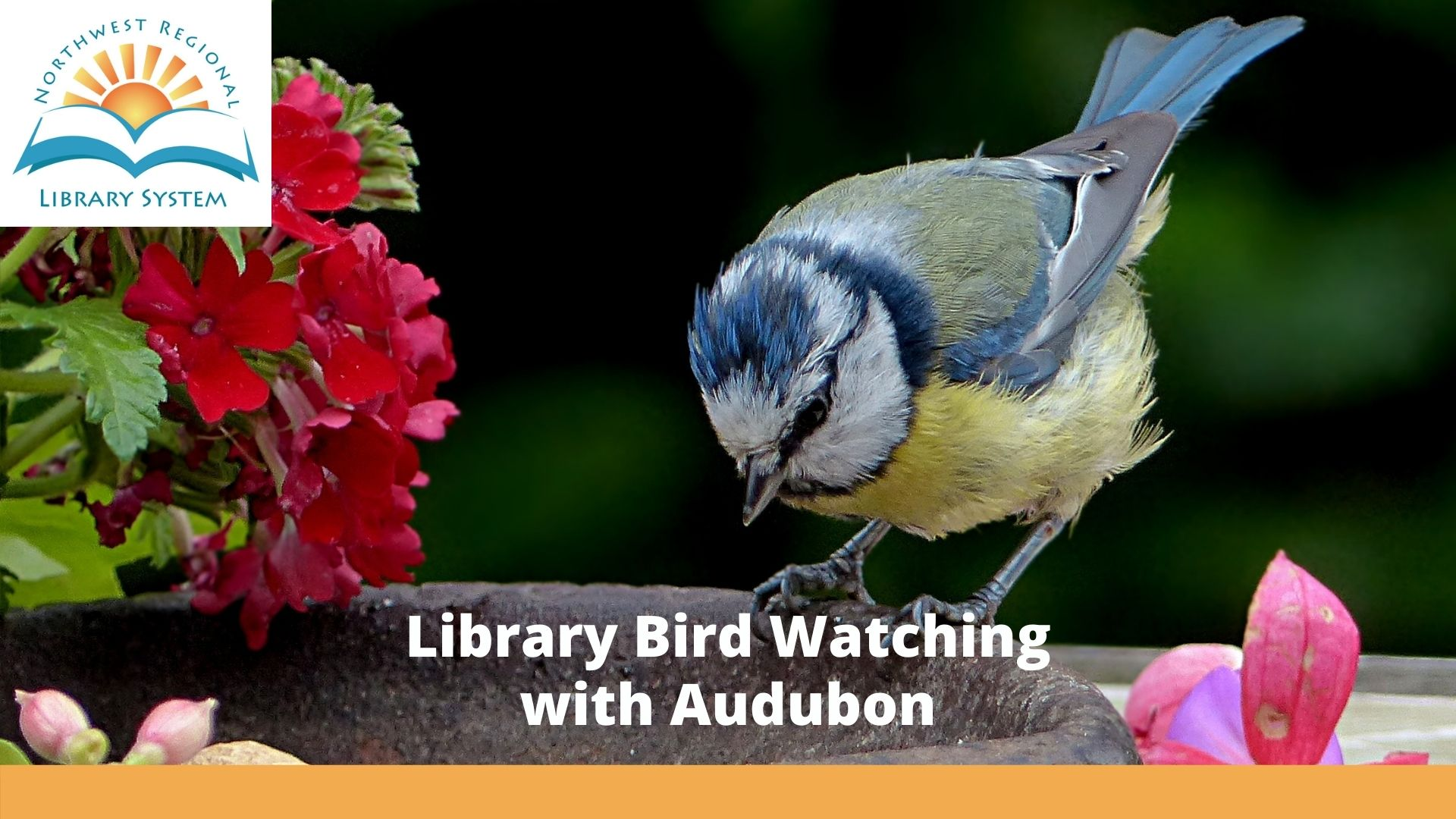 library bird watching