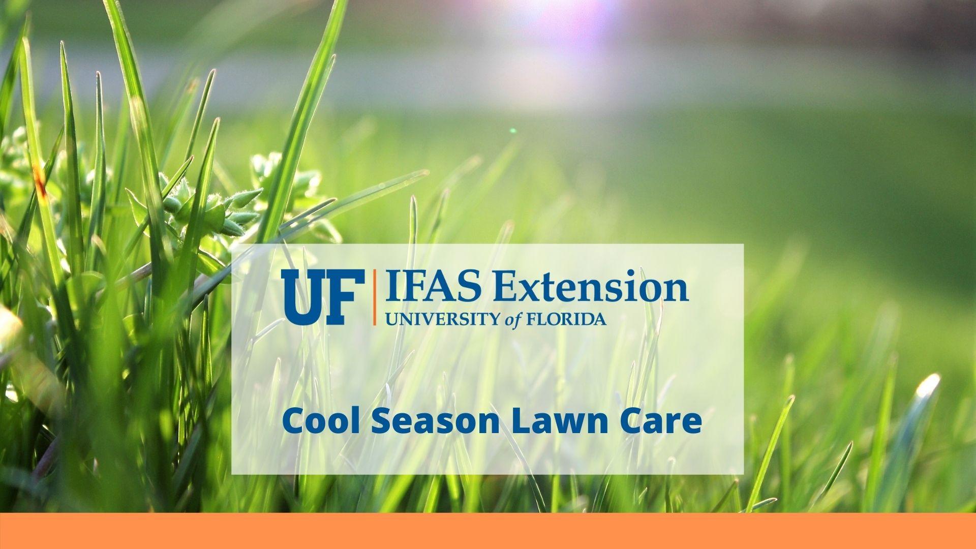 cool season lawn care