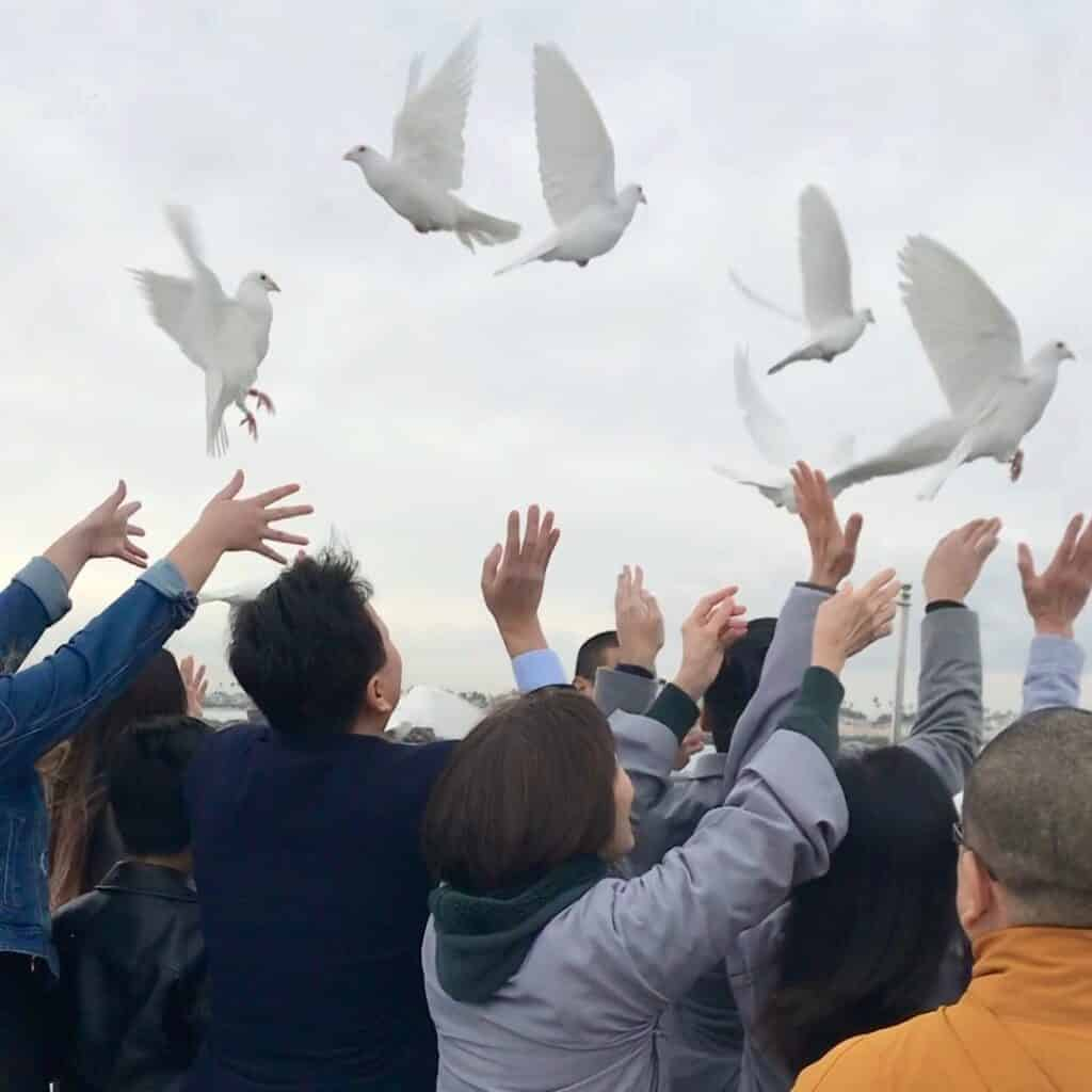 releasing doves, funeral, burial at sea, long beach, california