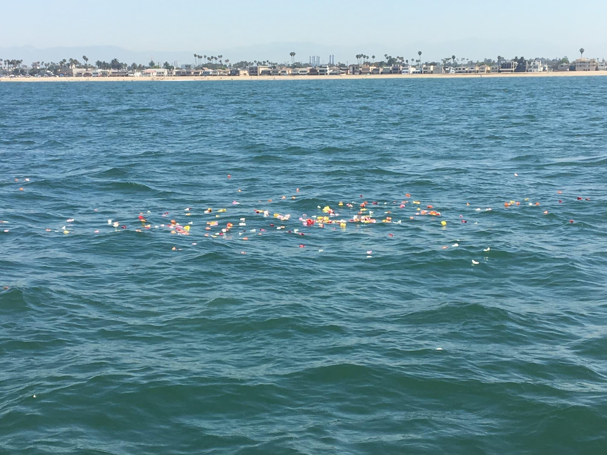 roses, long beach, California, coast, burial at sea