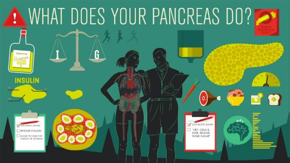 Image from TedEd Pancreas animated video