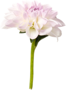 flower9.png