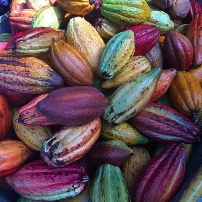 Experience the mystery of cacao
