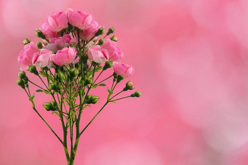 roses, flowers, background-6567178.jpg