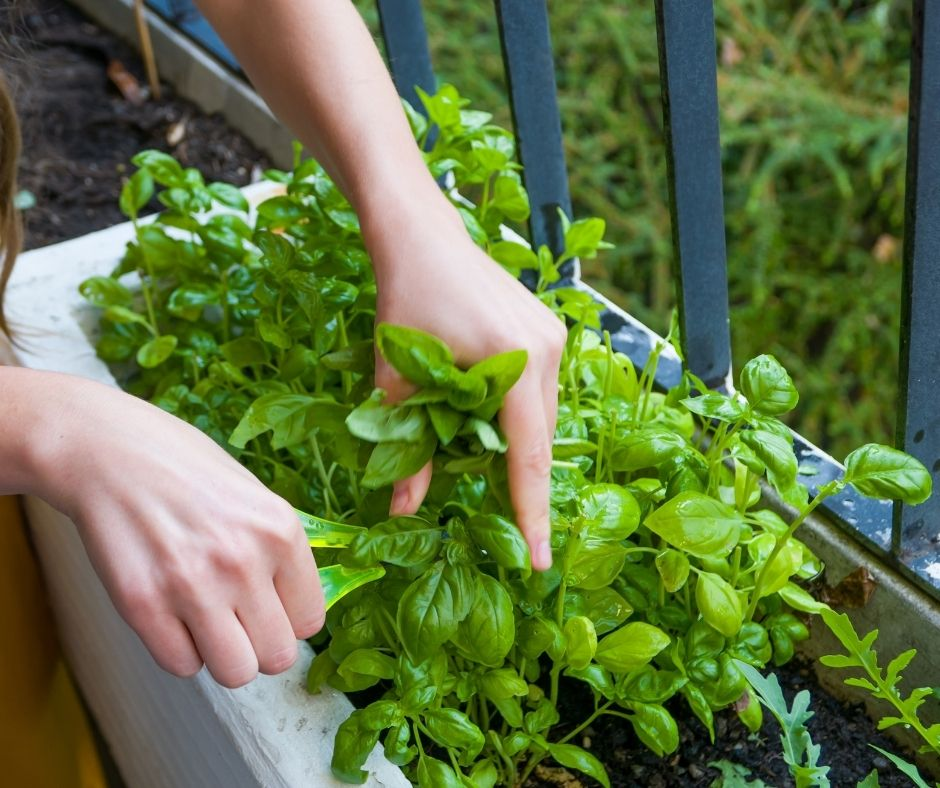 Grow some of your own organic herbs