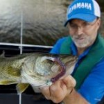 You can catch walleye like this on artificial baits