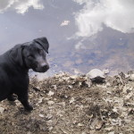 My dog Rip loved to go fishing with me