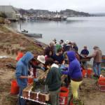Working to restore eel grass in Morro Bay