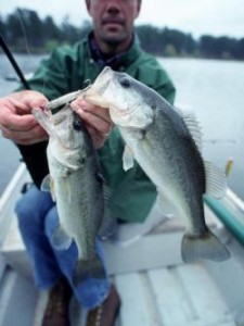 Two bass at a time