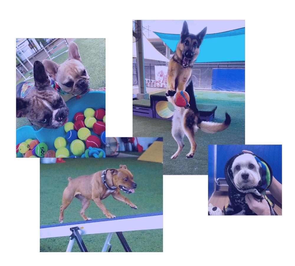 Dogs having fun at Jet Set Pets