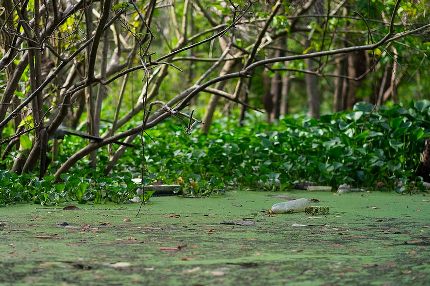 Foro virtual presenta desafíos y soluciones para la gestión de recursos hídricos en la Amazonía