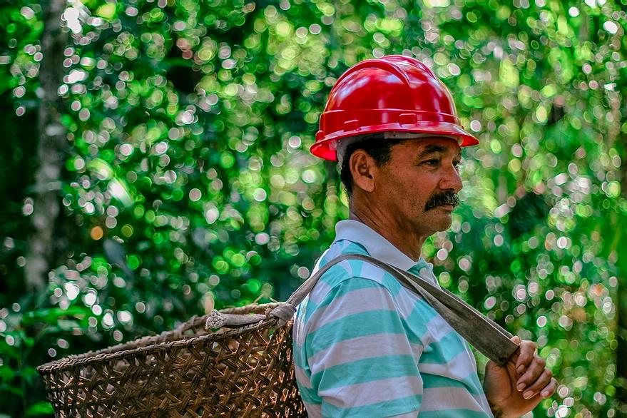 Debates sobre retomada econômica verde pós-pandemia marcam terceira edição do Amazon Day