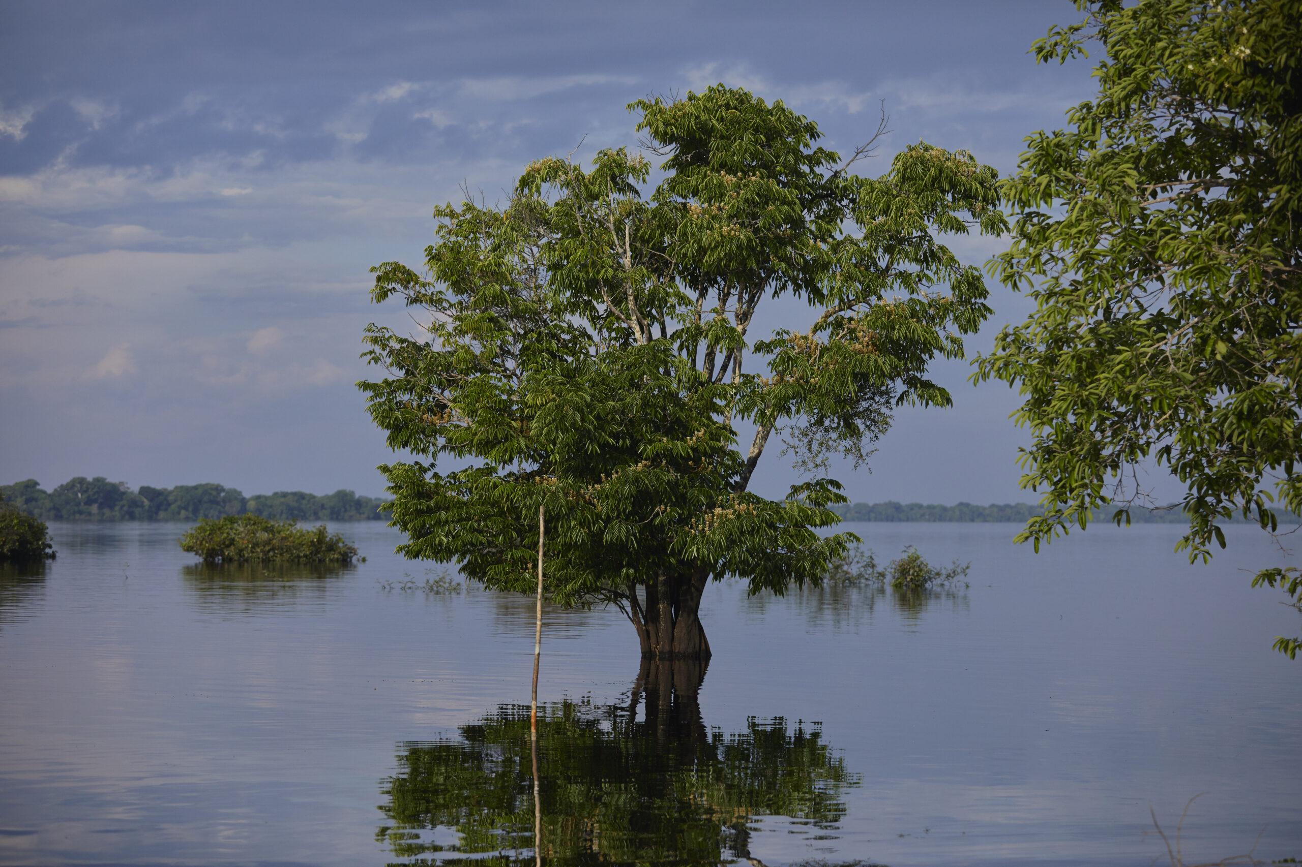 Soluções para conservação de florestas e da biodiversidade são apresentadas em evento virtual da SDSN  Amazônia