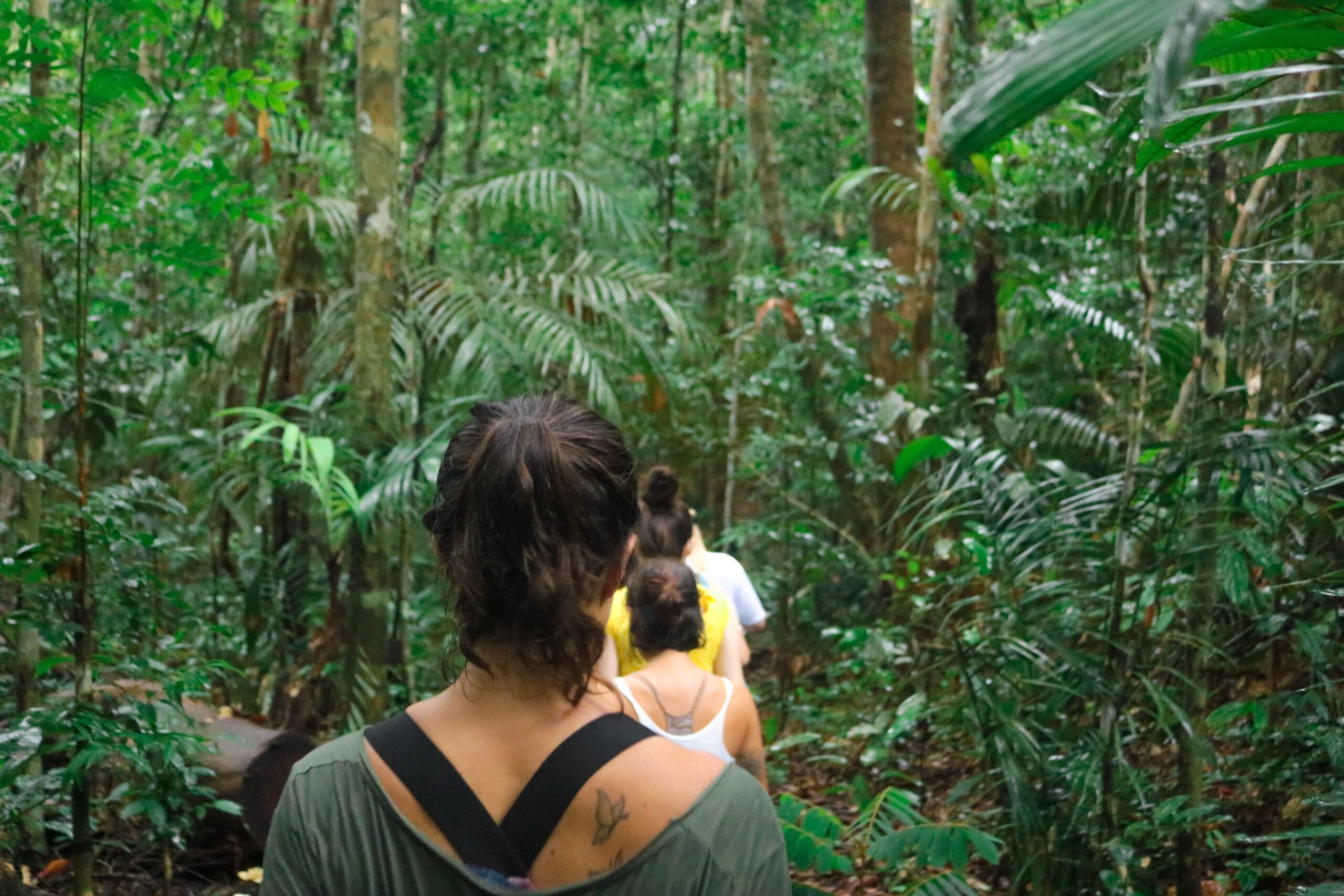Café Virtual debate na quarta-feira Florestas e Biodiversidade na Amazônia