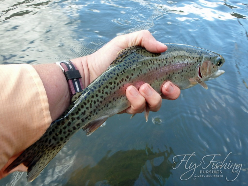 A small Crooked River Rainbow - with splendid dots and colors