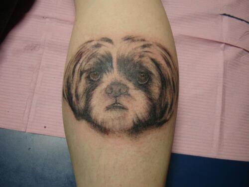 dog, animal portrait