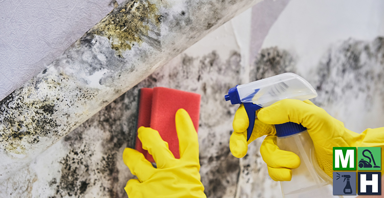 How to Clean and Kill Mold Using Everyday Household Products
