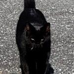 Ask Panther