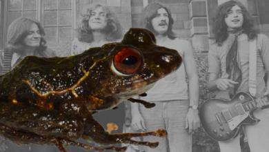 """Científicos descubren una nueva especie de rana y la nombran """"Led Zeppelin"""""""