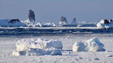 Se detectan contagios de COVID19 en la Antártida ❄🥶
