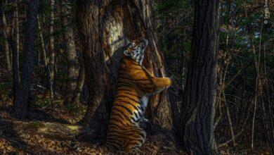 Comparten la mejor foto de vida salvaje este año 😍