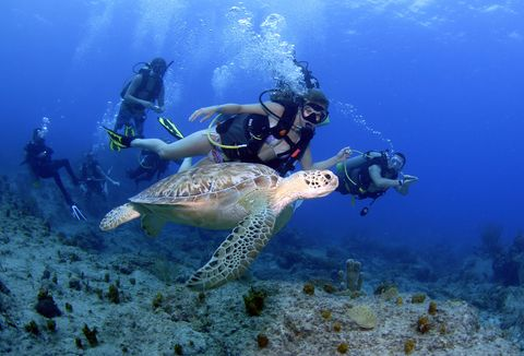 scuba diving, diving, snorkeling, turtle, Sun Sports islamorada