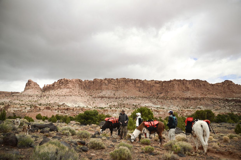 Wilderness-ridge-trail-llamas-sightseeing1-capital-reef-national-park-utah