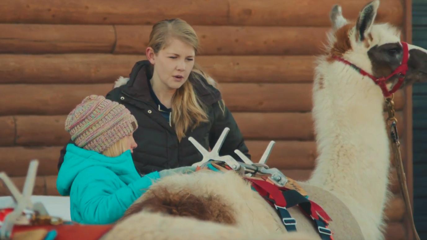 saddling a llama