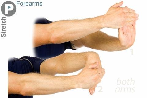 Forearms