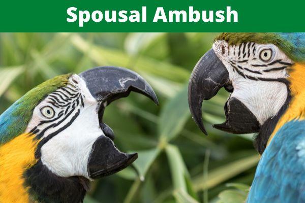 Spousal Ambush (Part 2)