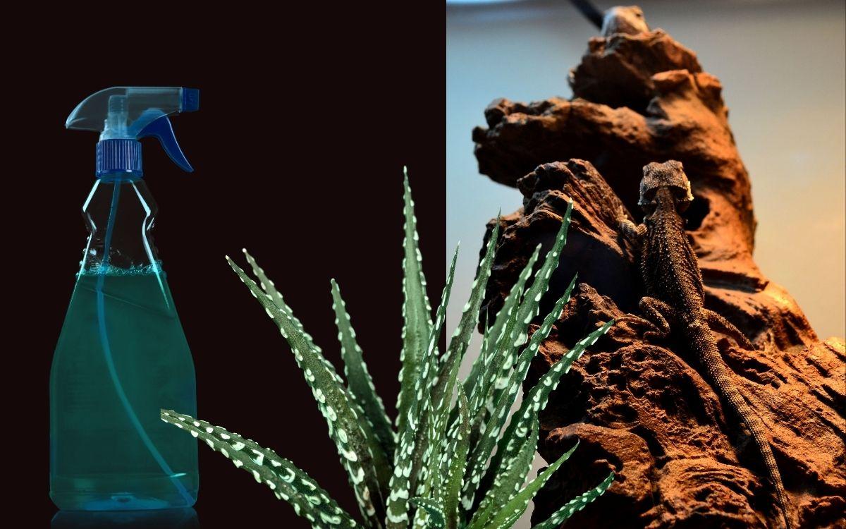 spraying-aloe-vera-on-baby-silkback-bearded-dragon
