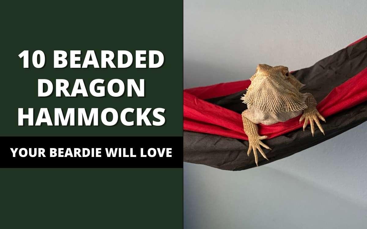 bearded-dragon-hammock-banner